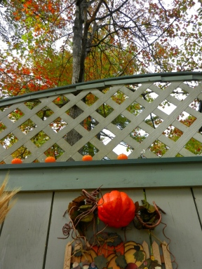 A Canopy of Fall Foliage