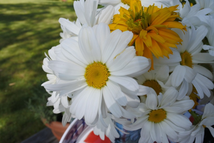 Daisies and Heliopsis